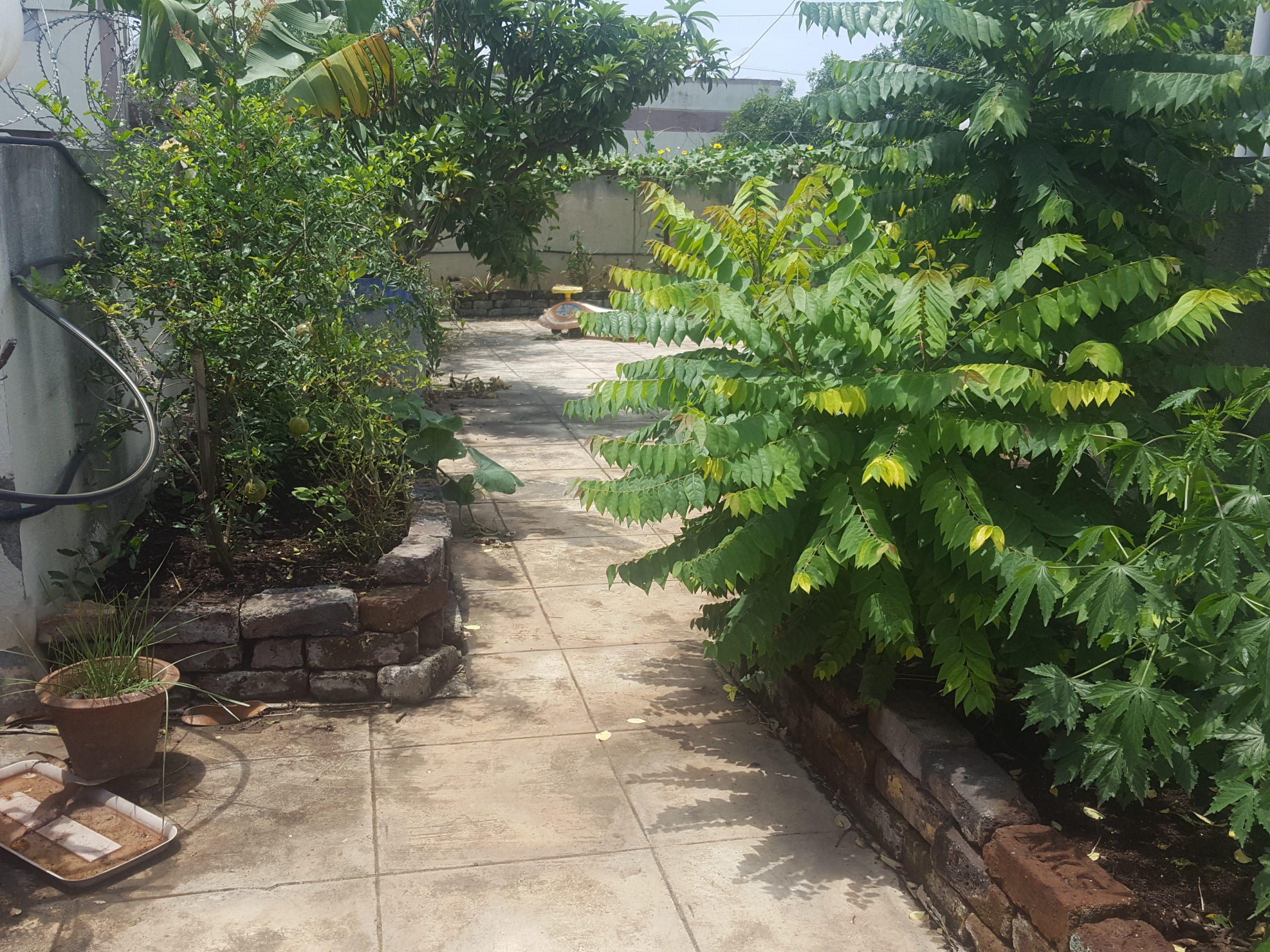 How to Create Terrace Garden Without Soil, Garden Visit 1
