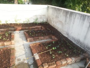 How to create terrace garden without soil, part 4
