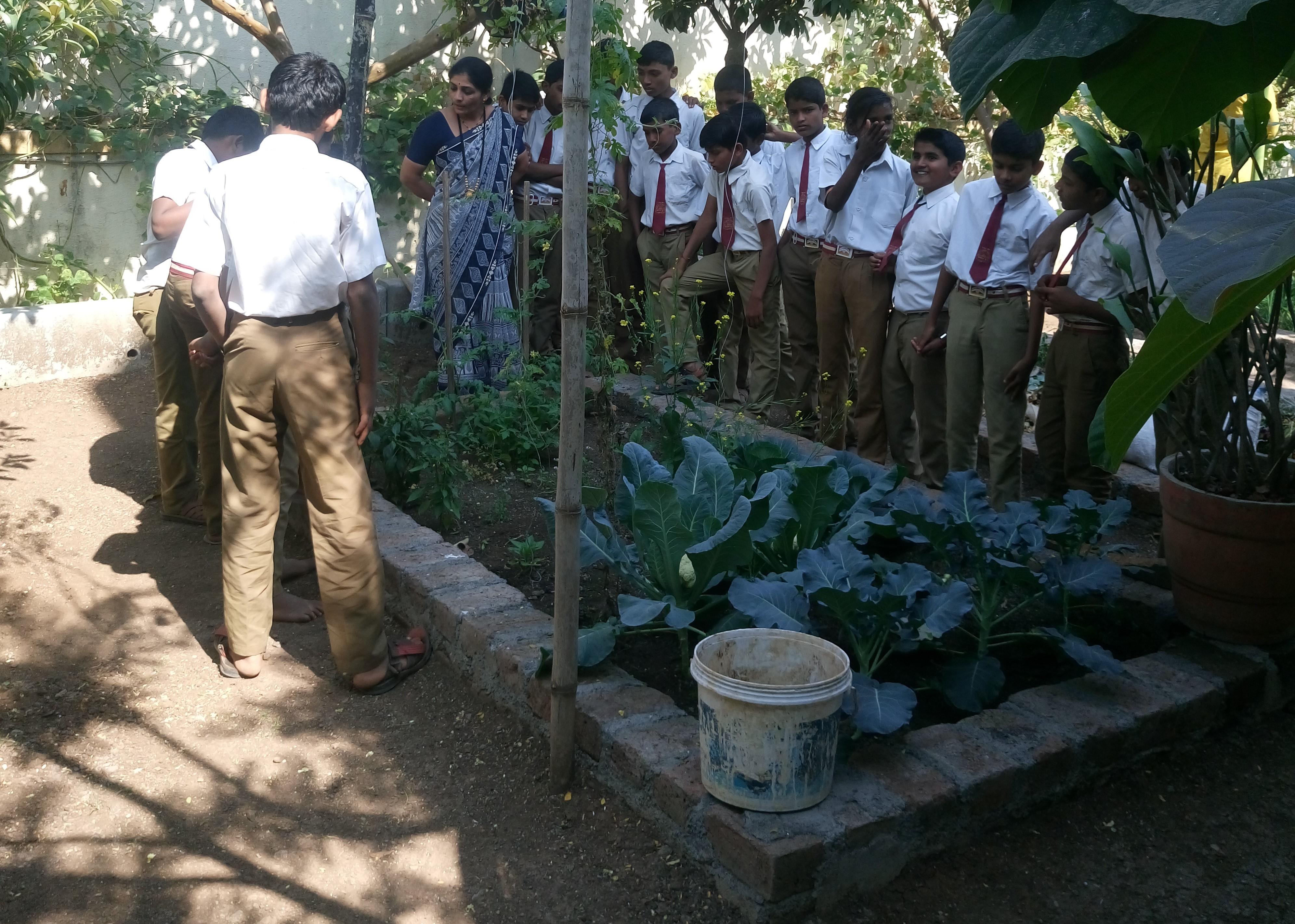 How to create terrace garden, part 7
