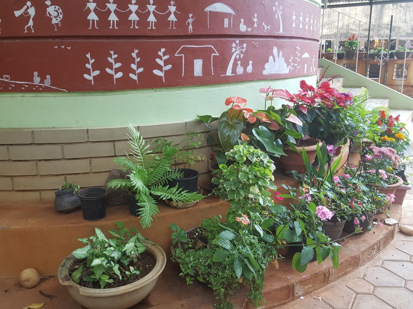 A plant in a garden Description automatically generated
