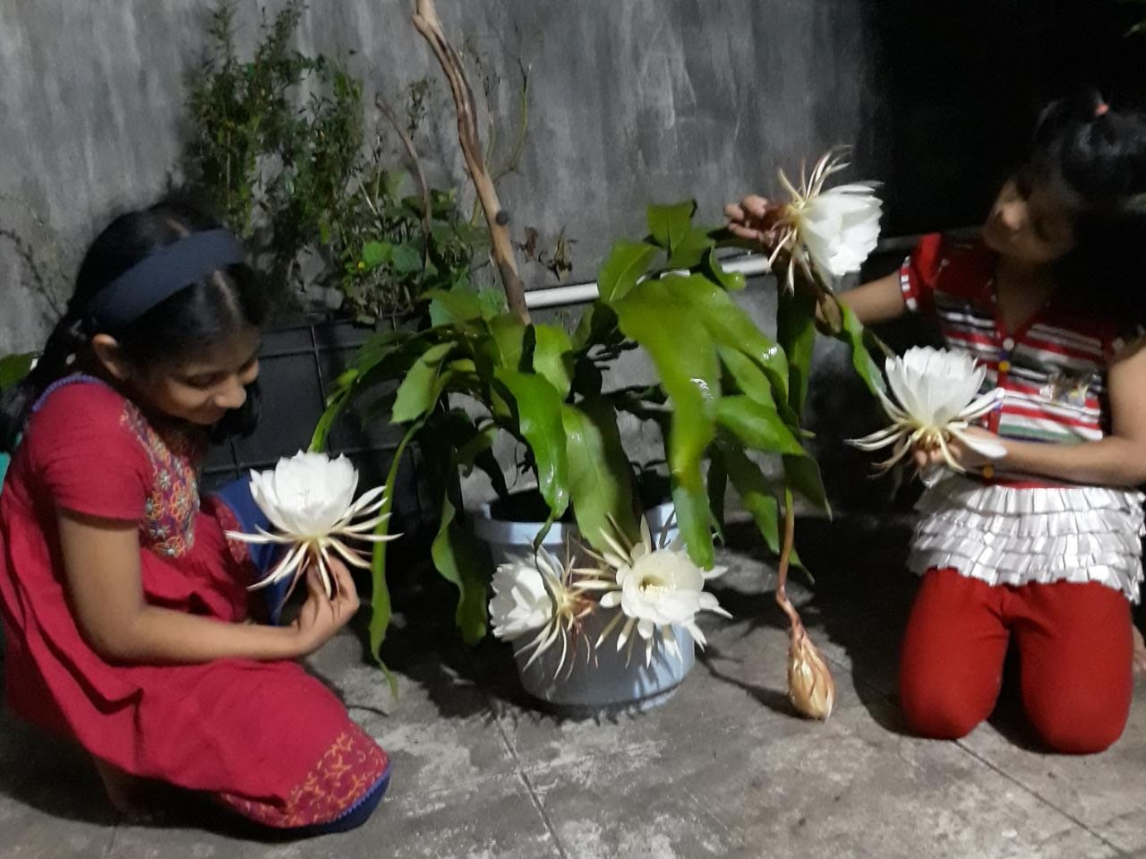 How to create garden, Part 11