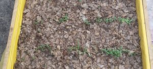 A picture containing ground  Description generated with very high confidence