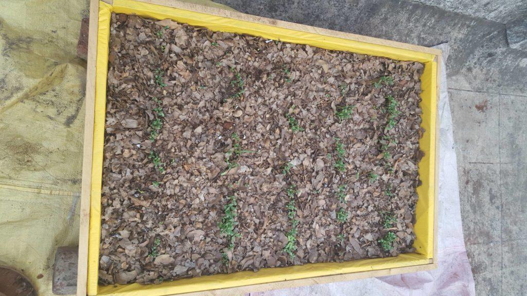 dry leaf mulch