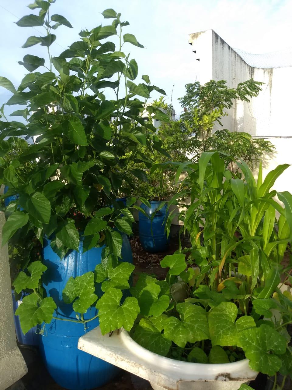 A green plant in a garden  Description automatically generated